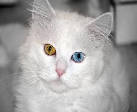 Разноцветные глаза у людей как называется