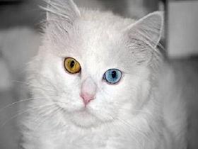 Болезнь, когда глаза разного цвета - гетерохромия, глаза разного цвета, цвет глаз, радужка