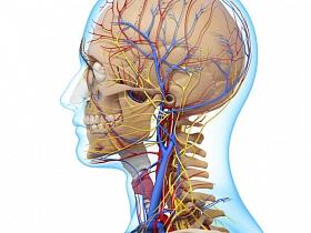 Экскавация диска зрительного нерва - зрительный нерв, дзн, строение, анатомия, диск, экскавация