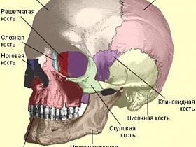 Строение глазницы - глазница, строение, функции, анатомия